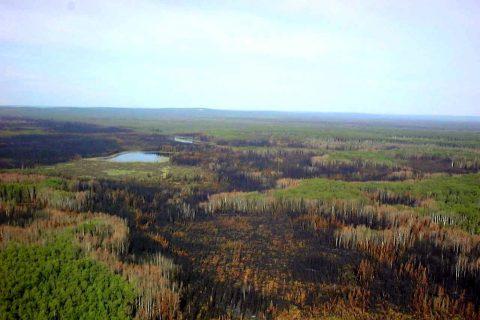 Natürliche Störung in Form von Waldbrand, natürliche Retention im Wald