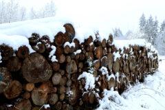 Ruler nahm Holzkäufer für die jährliche Inventur von Mercer-Holz