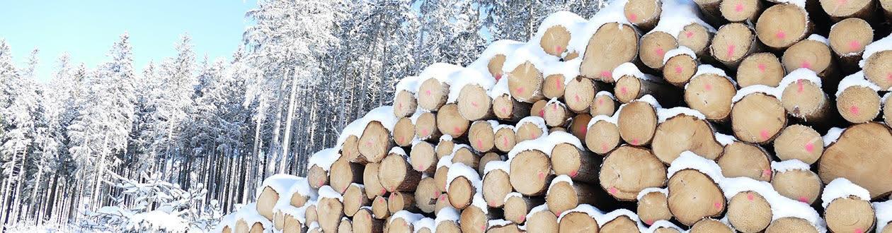 Ein Stapel Rundholz auf einer Mercer-Baustelle im Winter