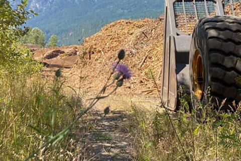 Lader am Hackschnitzelhaufen außerhalb der Mercer Celgar Zellstofffabrik in Castlegar, British Columbia, Kanada