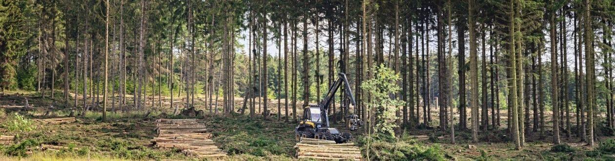 Ein Wald im Harz, Deutschland während des Sommers, mit einem Mercer Holz-Harvester im Einsatz